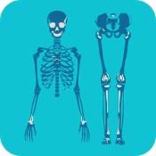 Anatomy (304)