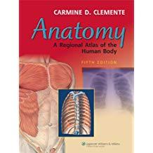 Anatomy A Regional Atlas Of The Human Body